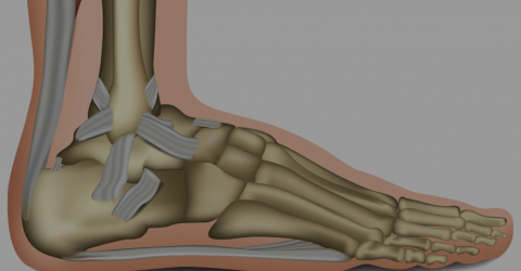 Caviglia - Ankle Joint